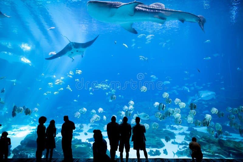 水族馆在亚特兰大,乔治亚 免版税库存图片