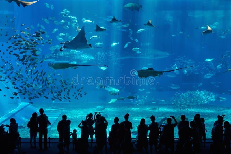 水族馆在冲绳岛市 免版税库存照片