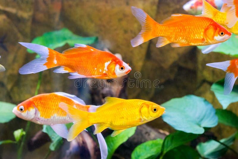 Download 水族馆鱼特写镜头通过玻璃 库存照片. 图片 包括有 本质, 颜色, beauvoir, 红色, 水族馆, 生活 - 72368492