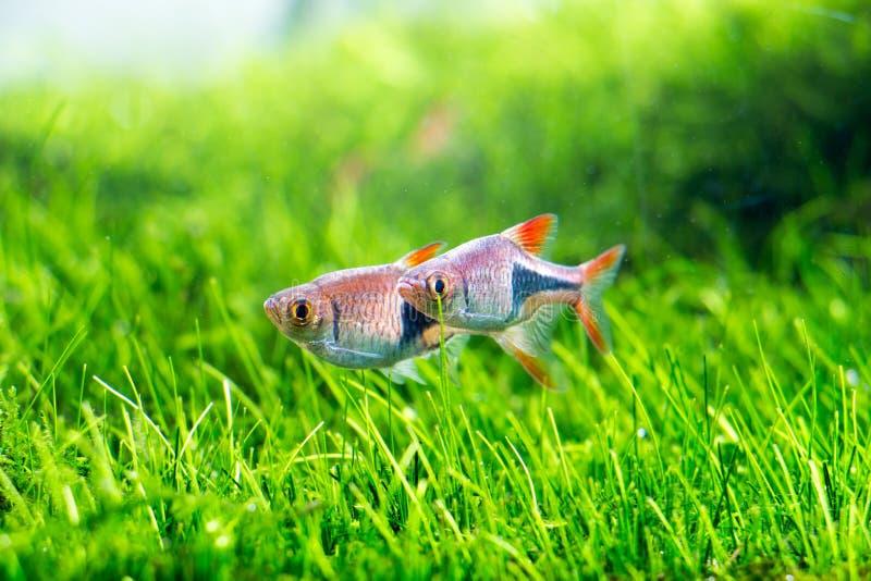 水族馆黑色图画鱼线路白色 库存图片