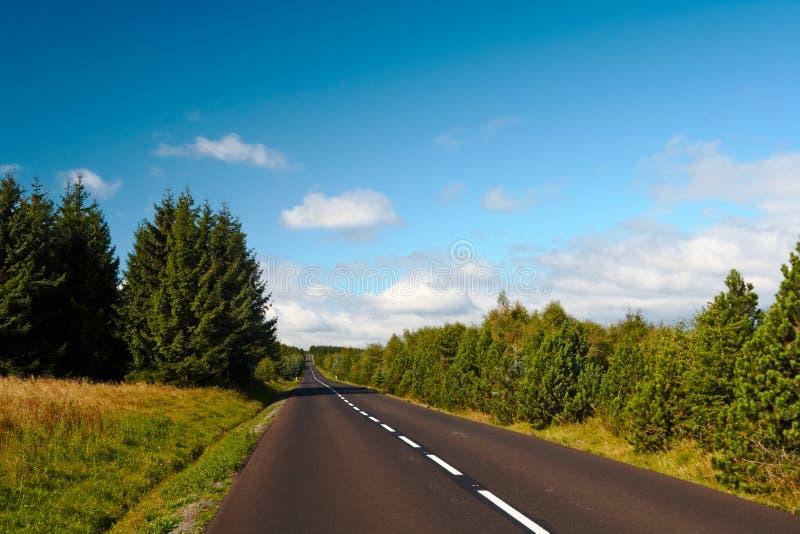 无处森林路 库存图片