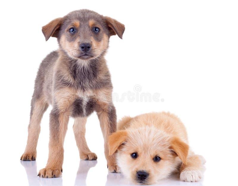 无家可归的小的小狗 免版税图库摄影