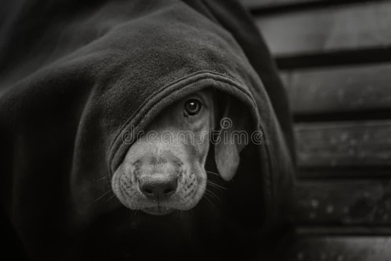 无家可归的小的小狗 免版税库存图片