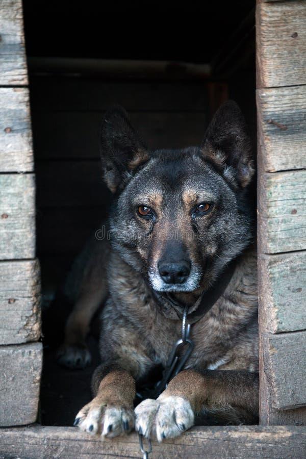 无家可归的狗在摊 免版税库存图片