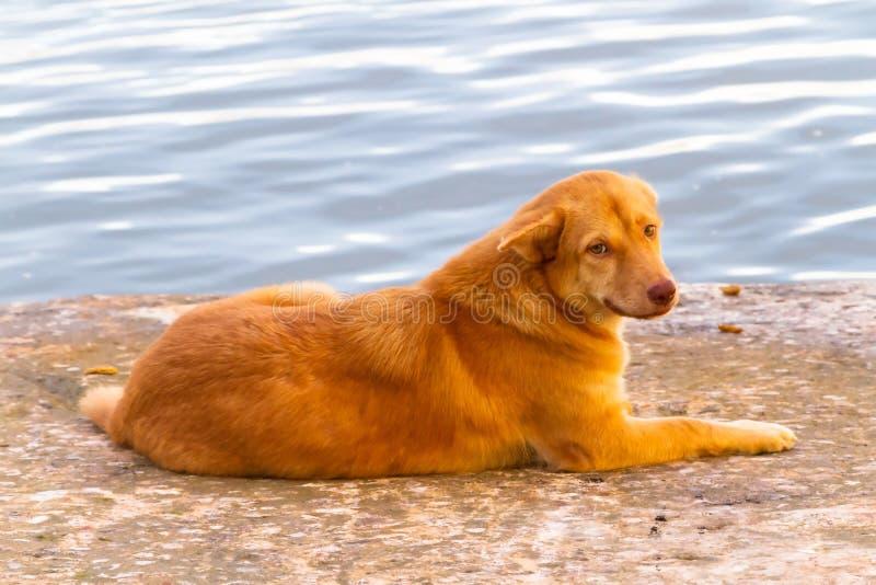 无家可归的狗在酸值Kho Khao港口  免版税库存照片