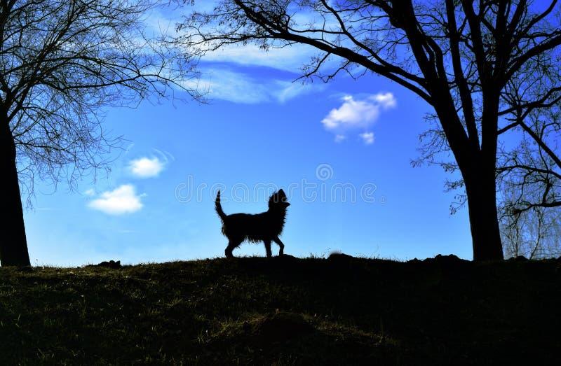 无家可归的狗在阳光沐浴 免版税库存图片