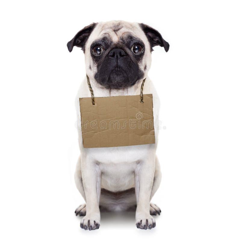 无家可归的狗 库存照片