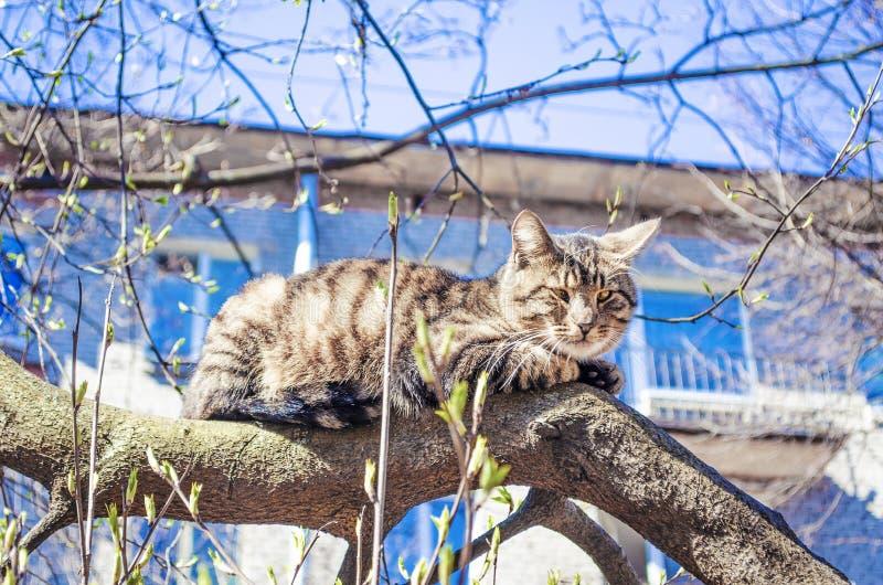 无家可归的猫在树说谎 免版税库存图片