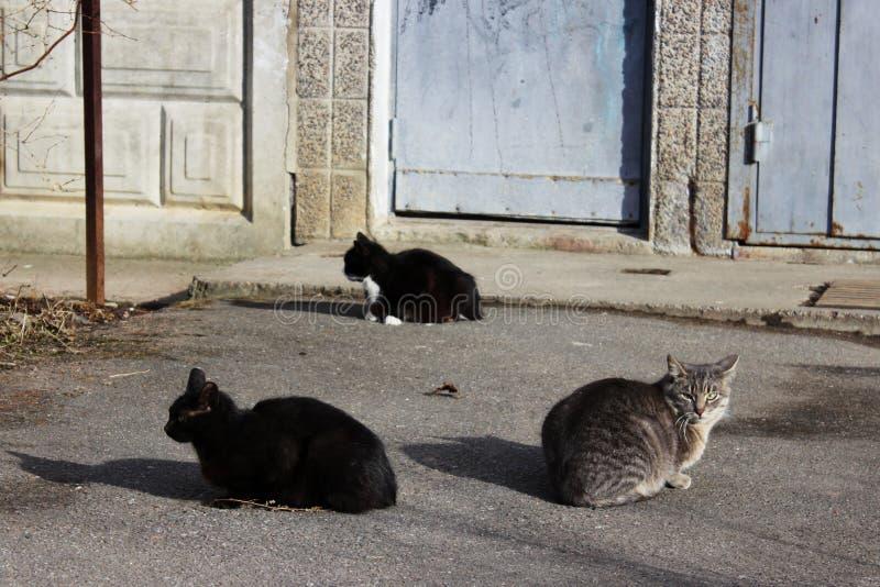 无家可归的猫-染黑和芦苇的颜色-,并且一只黑白小猫在的第一春天太阳取暖 免版税库存照片
