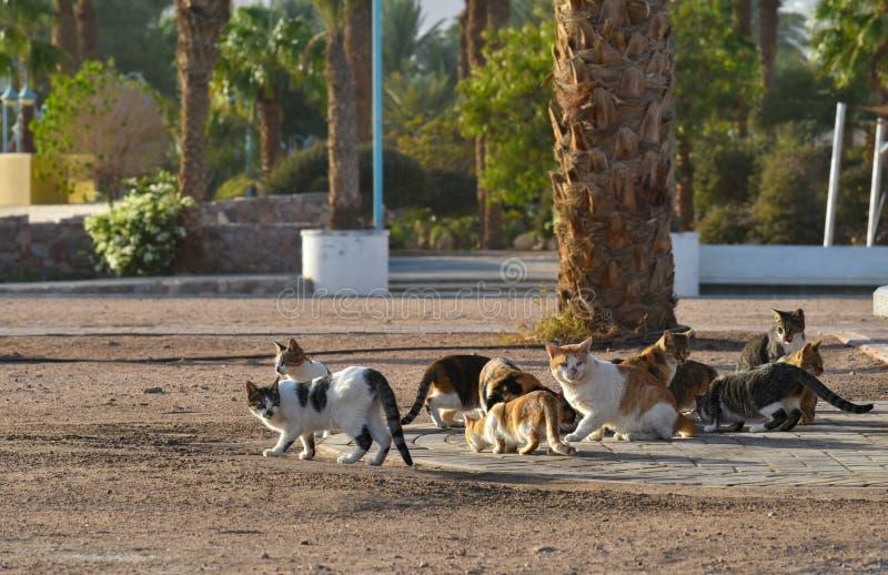 无家可归的猫 免版税库存照片