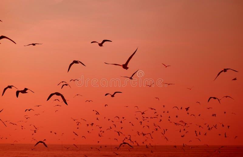 无数狂放的海鸥飞行剪影在海的充满活力的红色渐进性的 免版税库存图片