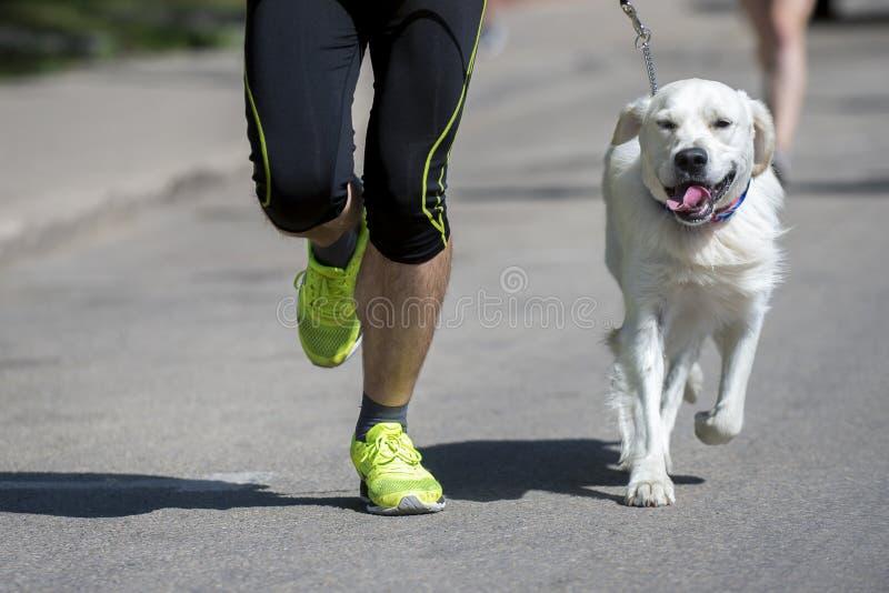 无法认出的赛跑者和一条狗在城市赛跑 库存图片
