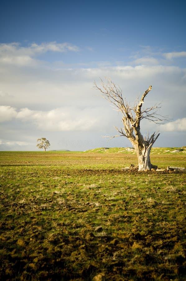 无生命的结构树 免版税库存图片