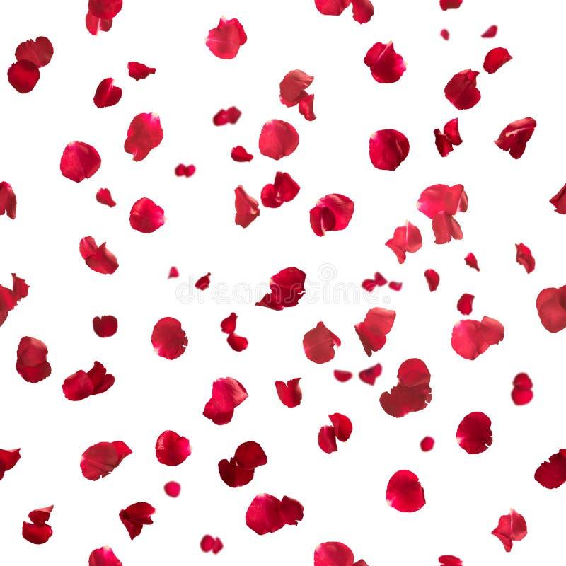 无缝瓣的玫瑰 免版税库存照片