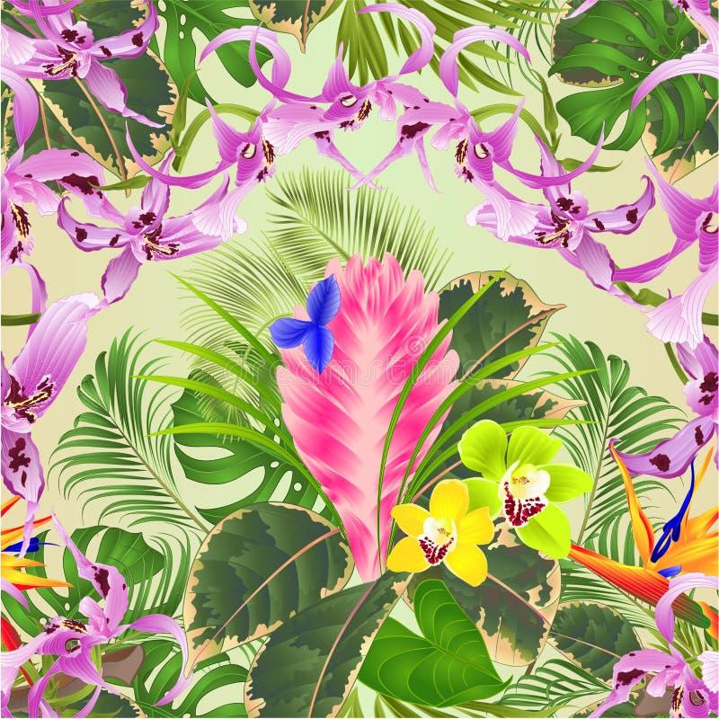 无缝的与美丽的兰花石斛兰属铁兰cyanea兰花和Strelitz的纹理热带花植物布置 皇族释放例证