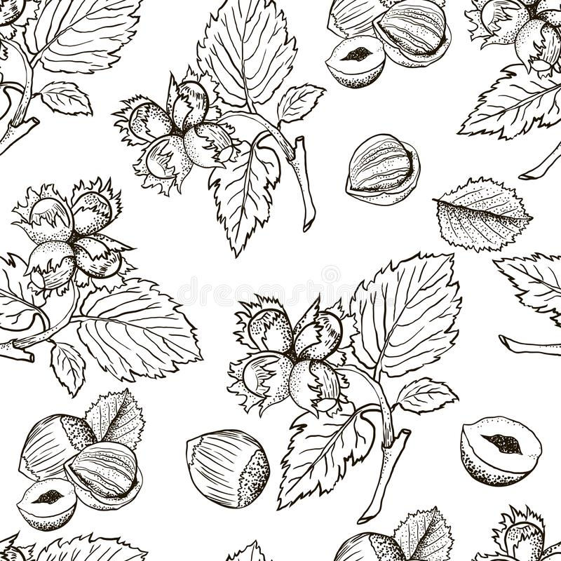 无缝的传染媒介样式用线性概述榛子 坚果剪影在葡萄酒样式的 向量例证