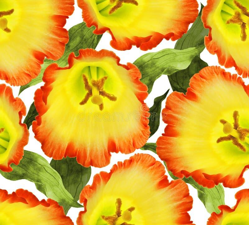 无缝的开花花背景 例证花卉样式 图库摄影