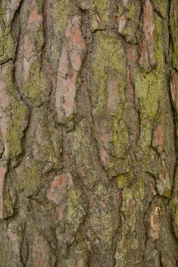 无缝的树皮背景 老树的布朗tileable纹理 免版税库存照片