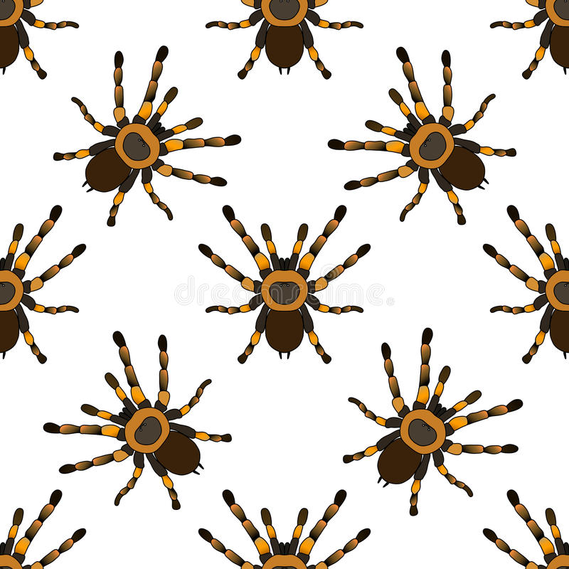 无缝的样式与 塔兰图拉毒蛛蜘蛛Brachypelma smithi手拉的塔兰图拉毒蛛蜘蛛Brachypelma smithi 向量 库存例证