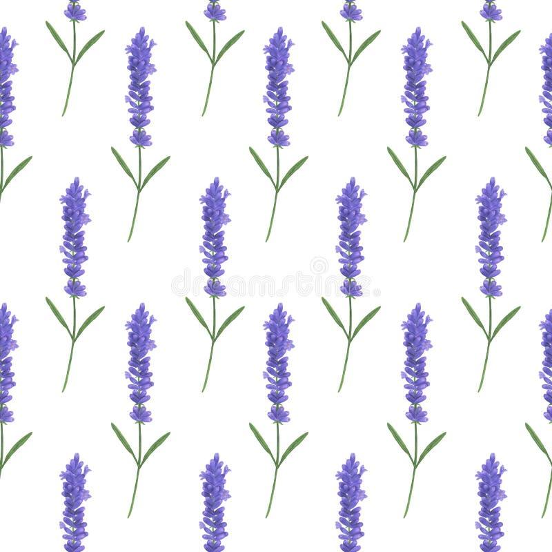 无缝的样式用水彩淡紫色 普罗旺斯叶子小树枝花卉纹理手工制造叶子数字纸文本的例证 向量例证