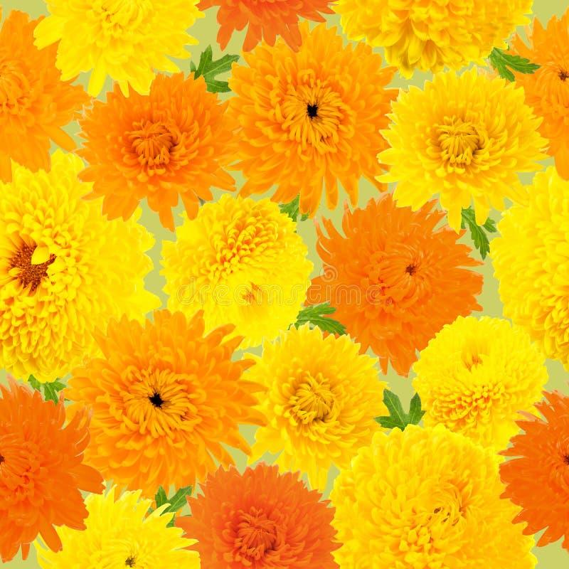 无缝的样式由橙色和黄色菊花做成在浅绿色的背景 免版税库存图片