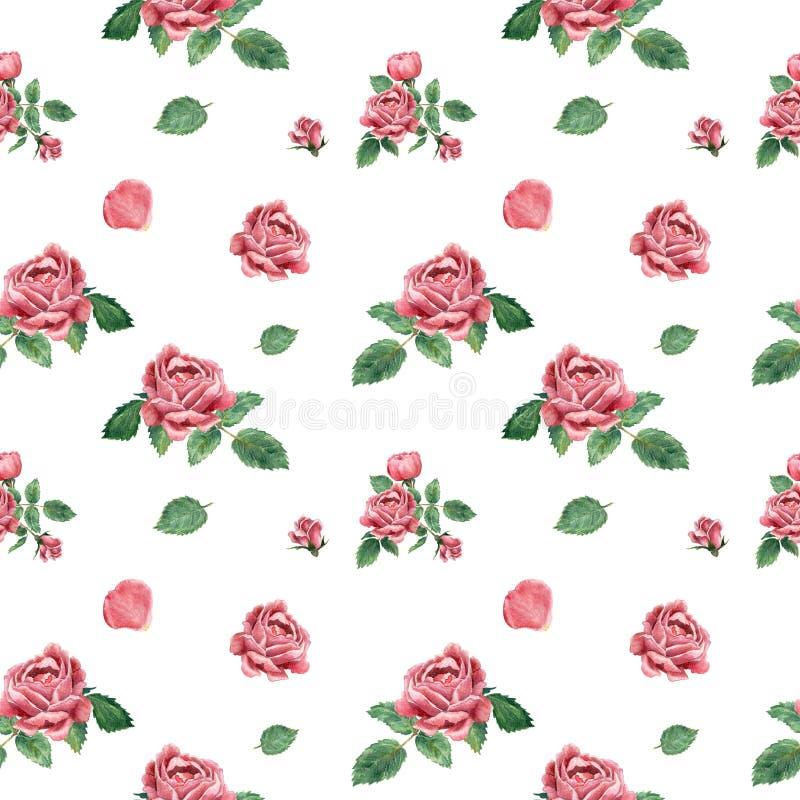 无缝的样式,由桃红色开花的玫瑰做成,手拉的植物的例证 库存例证