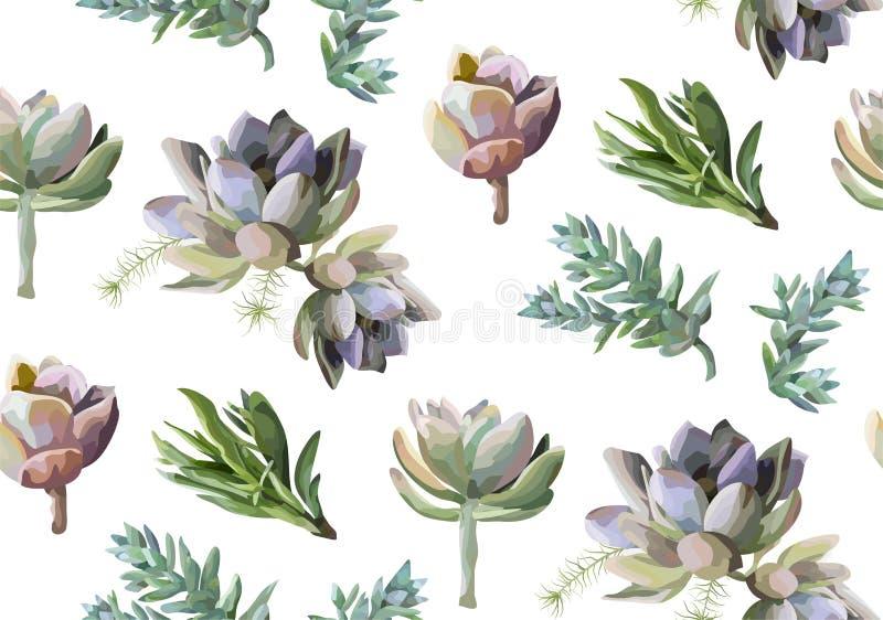 无缝的样式:多汁花植物水彩手拉的b 向量例证