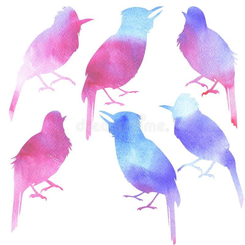 无缝的样式水彩唱歌鸟 向量例证
