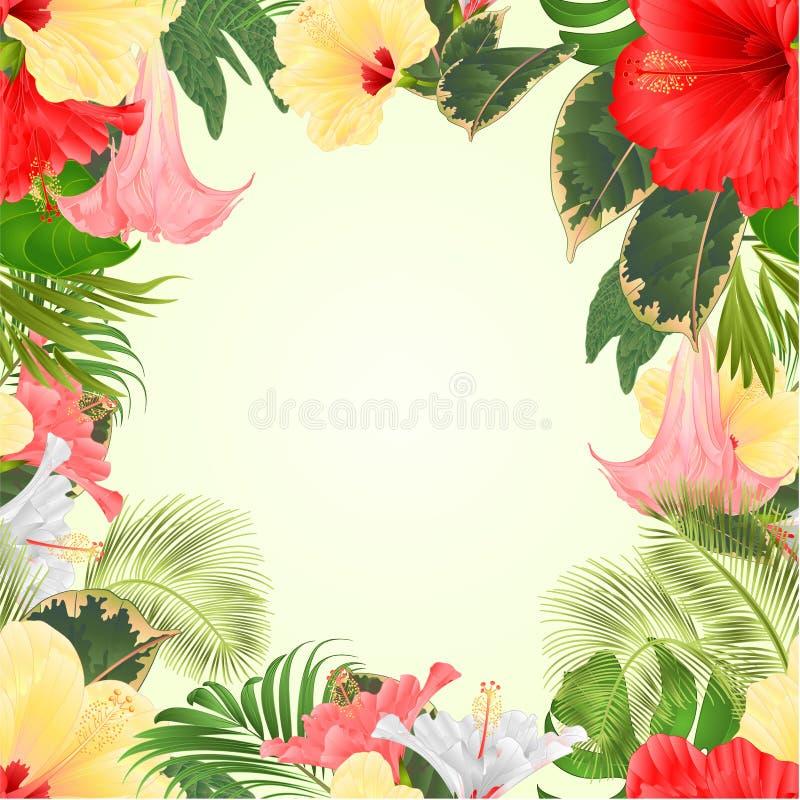 无缝的框架热带花植物布置,与红色和黄色木槿和Brugmansia棕榈,爱树木的人葡萄酒vect 向量例证