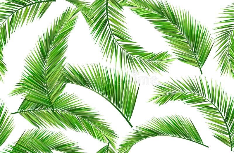 无缝的椰子叶子 向量例证