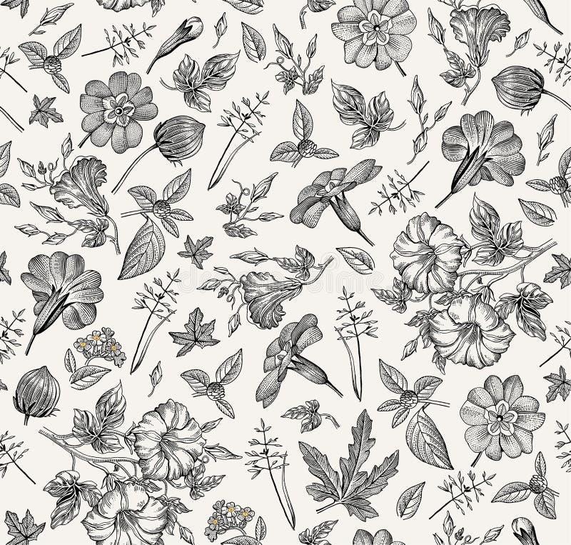 无缝的模式 现实被隔绝的花 葡萄酒背景喇叭花primavera hibisc图画板刻传染媒介 向量例证