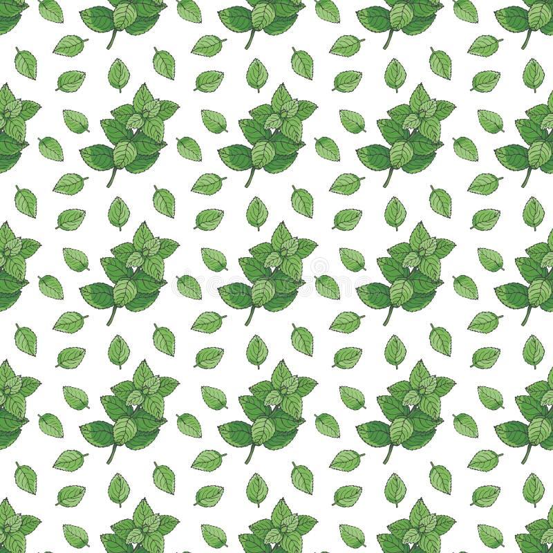 无缝的模式 绿色薄菏和薄荷叶在白色背景 皇族释放例证