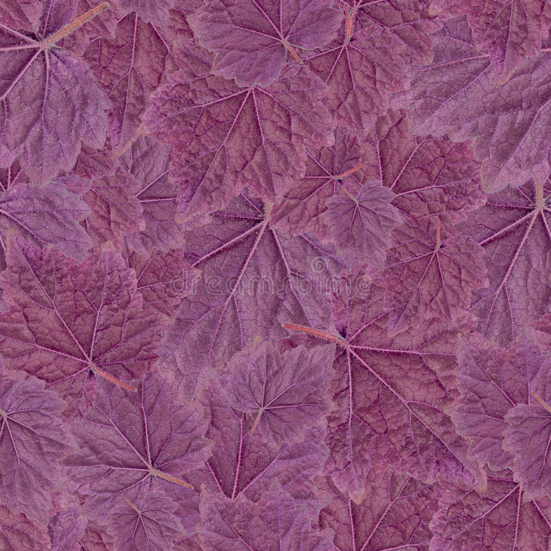 无缝的模式 紫色叶子在白色背景隔绝的盖埃尔 免版税库存图片