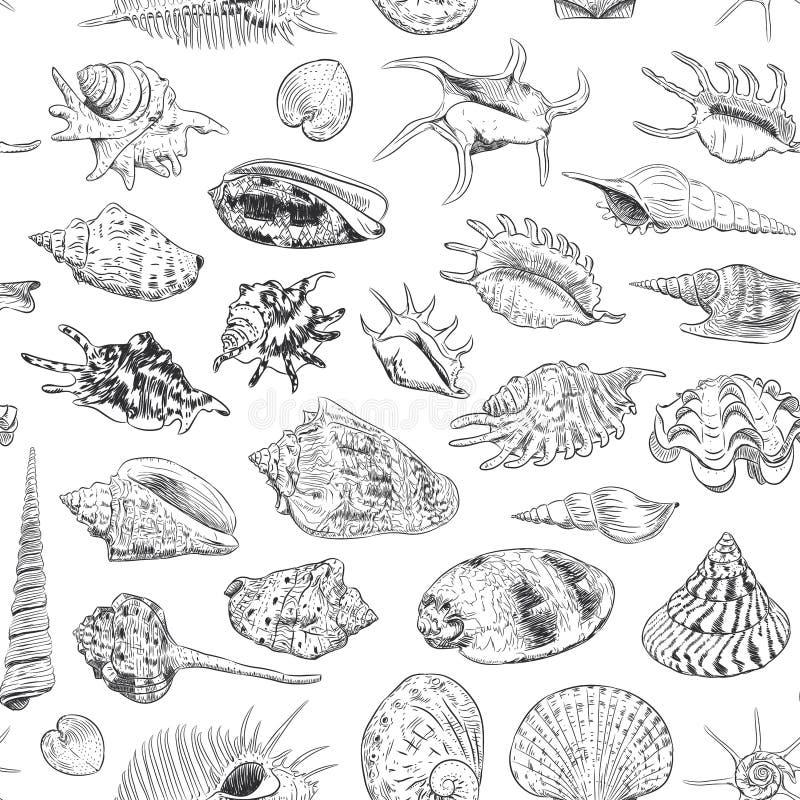 无缝的海的样式独特的博物馆收藏轰击罕见的濒于灭绝的物种,软体动物腹足动物双壳纲金星三梳子的骨螺等 向量例证