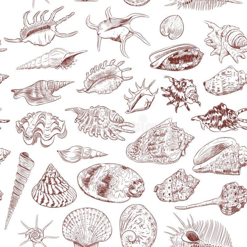 无缝的海的样式独特的博物馆收藏轰击罕见的濒于灭绝的物种,软体动物腹足动物双壳纲金星梳子骨螺等惊叹 皇族释放例证