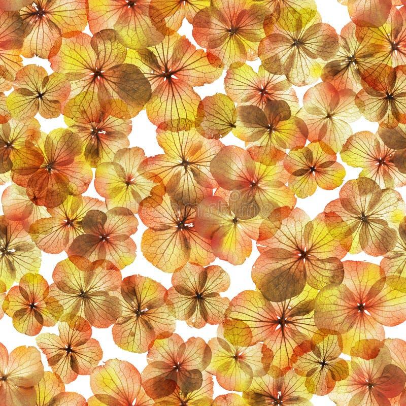 无缝的秋天花 图库摄影