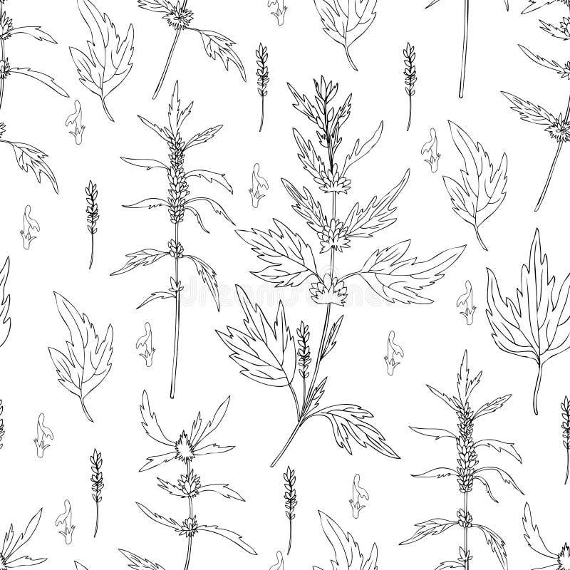 无缝的花卉在白色背景隔绝的样式益母草花手拉的传染媒介,草本医疗镇静植物 皇族释放例证