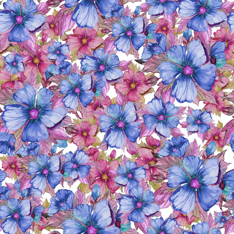 无缝的花卉样式由红色和蓝色锦葵属制成在白色背景开花 多孔黏土更正高绘画photoshop非常质量扫描水彩 向量例证