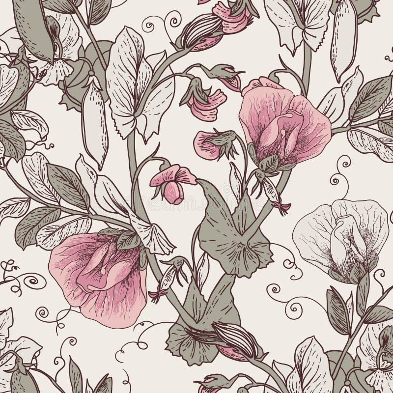 无缝的花卉背景用开花的豌豆 向量例证