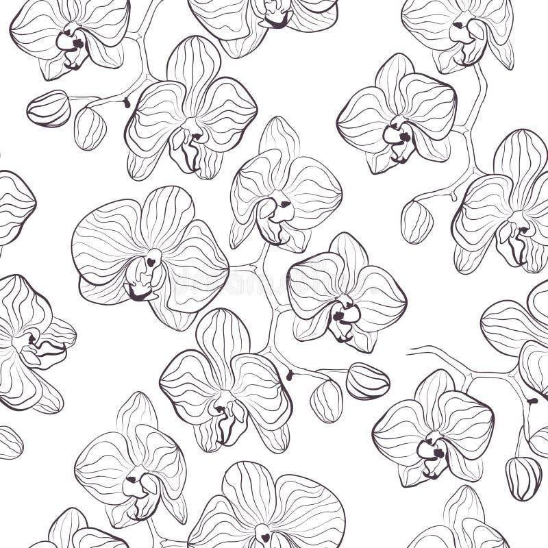 无缝的花纹花样有兰花兰花植物背景 向量例证