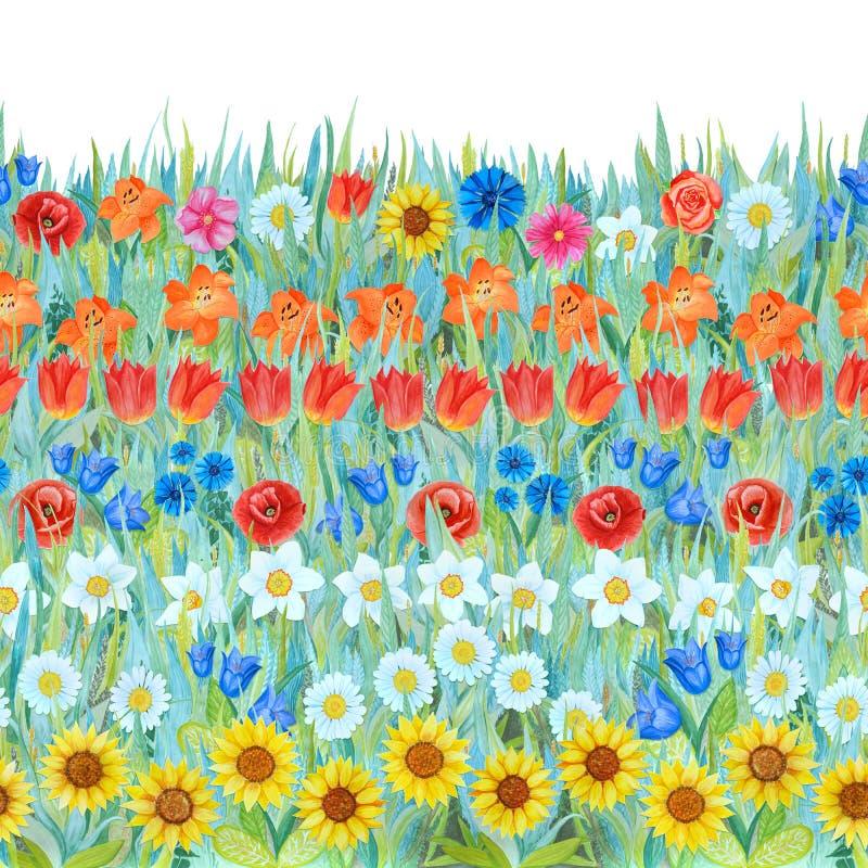 无缝的花纹花样:黄水仙,郁金香,春黄菊,鸦片,矢车菊,向日葵,会开蓝色钟形花的草,在草上升了 向量例证