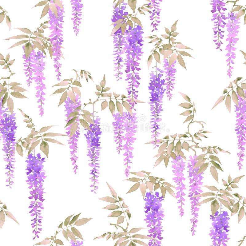 无缝的水彩样式,浅紫色的紫藤群开花 库存例证
