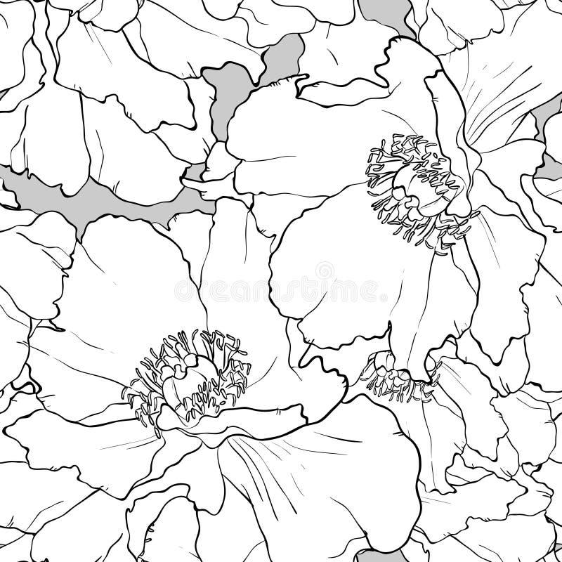 无缝美好的花卉的模式 牡丹 向量例证