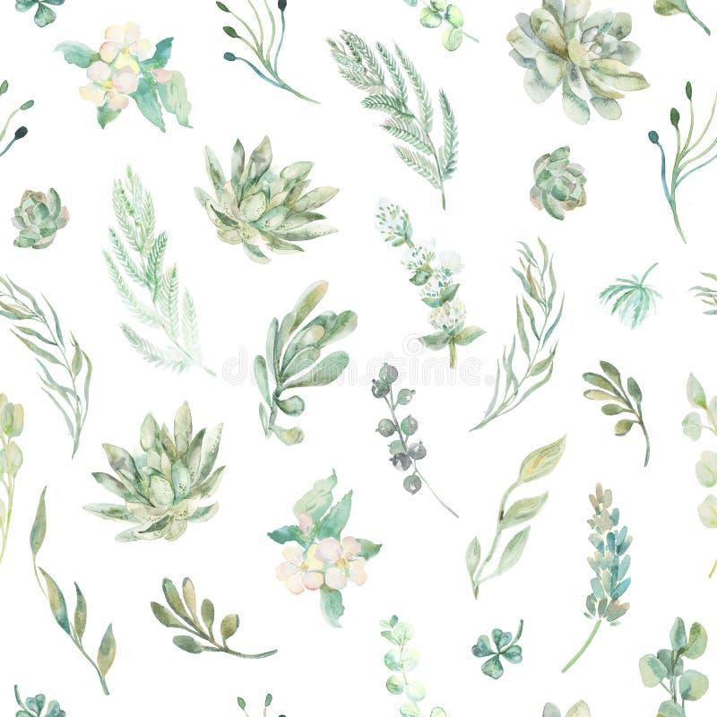无缝花卉的模式 多汁植物,蕨,刺 皇族释放例证