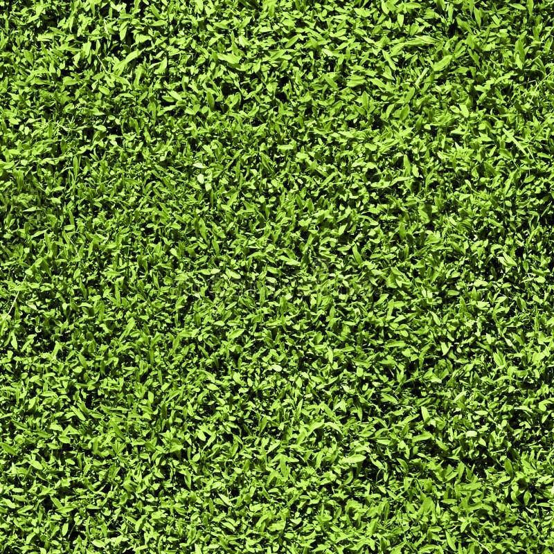无缝草的模式 库存图片