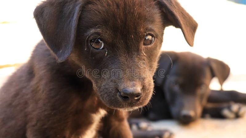 无辜的小离群小狗 免版税库存图片