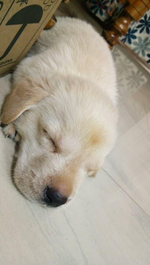 无辜的狗 免版税库存图片