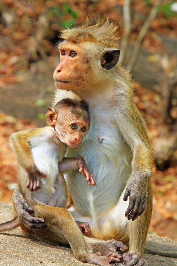 吃,猴子,题头,饰面,表面,不吃,爱,短尾猿,哺乳动物,眼睛鸽子吃查找白萝卜
