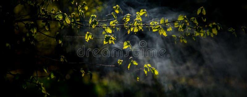 日出光和薄雾点燃的叶子 免版税库存照片