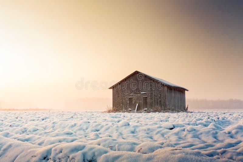 日出和薄雾在斯诺伊领域 免版税库存图片